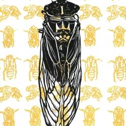 Cicada 2008