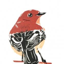 Round Robin 2011