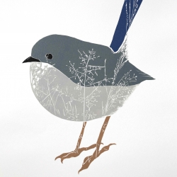 Fairy-wren 2013