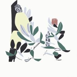 Banksia at Sawtell