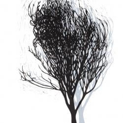 Tinderbox tree  2009