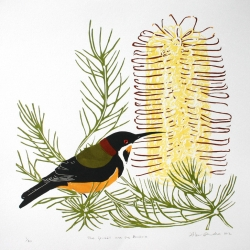 The spinebill and the banksia_2012
