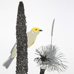 white-plumed honeyeater 2013
