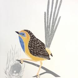 Southern emu wren 2019, colour linocut, edition of 6 64x41 cm